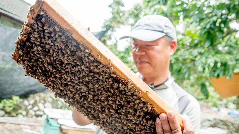 彰化縣二水鄉 日華養蜂場
