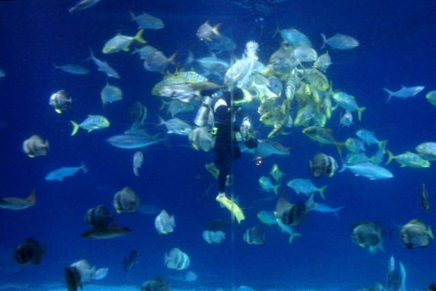 【屏东】海生馆鱼儿鱼儿水中游