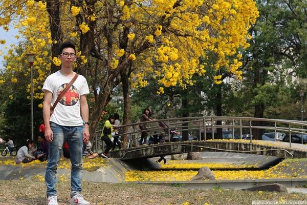台中豐富公園:台中豐富公園✪黃金風鈴木~我也趕上了~104.03.08