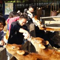 苗栗縣 休閒旅遊 評鑑 觀光農場 飛牛牧場