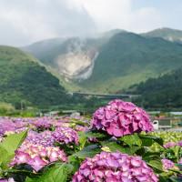 台北市 休閒旅遊 景點 觀光花園 大賞園海芋園 照片