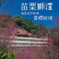 苗栗縣 休閒旅遊 景點 古蹟寺廟 協雲宮櫻花 照片