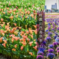 賞花最前線-《桃園大園》2018桃園彩色海芋季 5種顏色人氣海芋繽紛盛開、內含交通資訊
