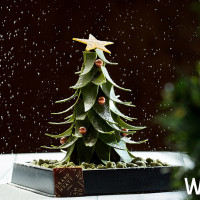 挑戰全台最齊全聖誕主題甜點!台北君悅Baguette禮品烘焙坊推出「超萌爆表」聖誕甜點,再加碼推出火雞、火腿禮盒。